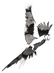 black and white monochrome painting with water and ink draw parrot bird illustration