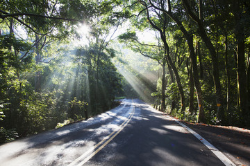 The road to Hana with sunlight shining through trees; Maui, Hawaii, United States of America