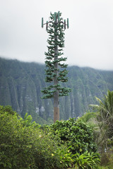 A Cell Signal Tower Camouflaged As A Tree; Oahu, Hawaii, United States Of America