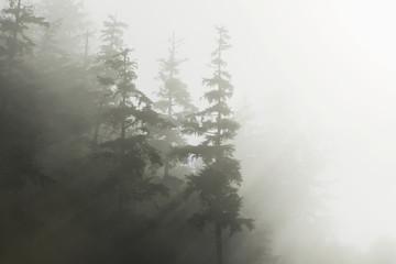 Morning suns rays break through the fog and mist, Tongass National Forest, Inside Passage, Alaska