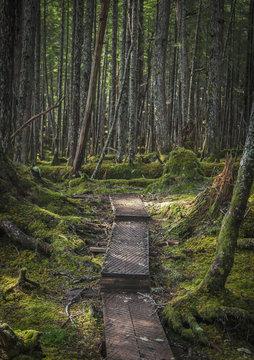 Haystack boardwalk trail through the rainforest oustide of Cordova, Southcentral Alaska; Alaska, United States of America
