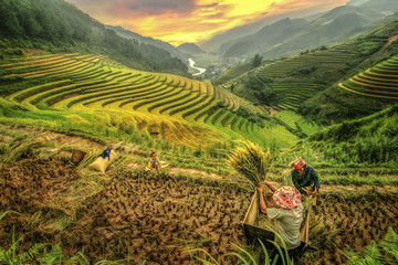 Happy family in rice terraces Mu cang chai,Yenbai,Vietnam. Wall mural