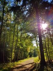 Waldweg in einem Mischwald mit Sonnenlicht