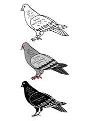 set of pigeon bird animal hand drawn vector illustration design