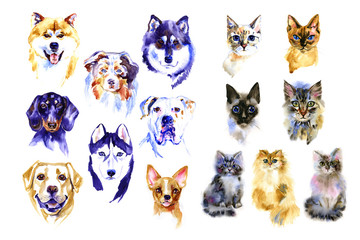Dog and cats hand drawn watercolor colorful illustrations set