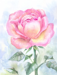 pink garden rose, watercolor painting. Hand-drawn sketch, illust