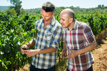 Two gardeners standing together in grapes tree yard and looking