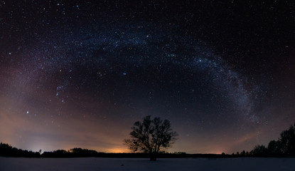 Milky way over the lonely tree