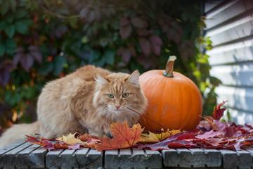 Рыжий кот осенью на крыльце с кленовыми листьями и тыквой