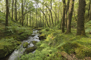 Valley Stream shot in Dartmoor National Park, Devon, England, UK