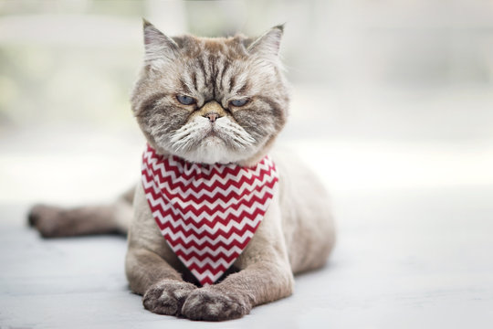 Angry looking cat