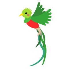 Flying Quetzal bird animal cartoon character. Isolated on white background. Vector illustration.