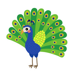 Peacock animal cartoon character. Isolated on white background. Vector illustration.