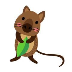 Quokka holding leaf animal cartoon character. Isolated on white background. Vector illustration.