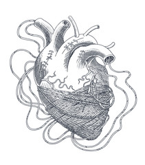 Stylized illustration of heart tangled in threads