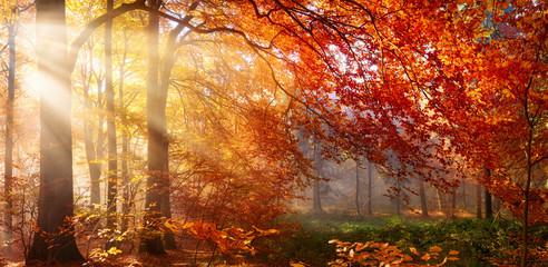 Photo sur Aluminium Bestsellers Herbst im Wald, mit Lichtstrahlen im Nebel und rotem Laub