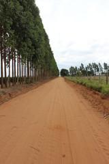 Estrada rural de terra
