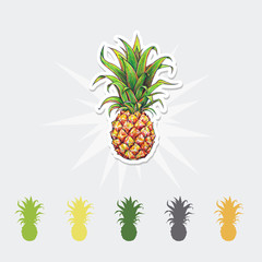 Pineapple color vector illustration. Tropical fruit set.