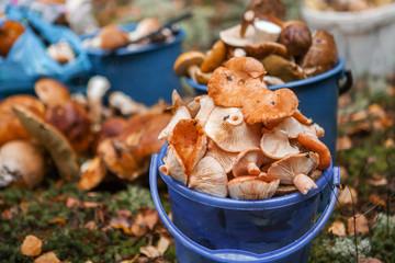 Mushrooms close up.