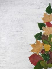 Композиция из осенних листьев.