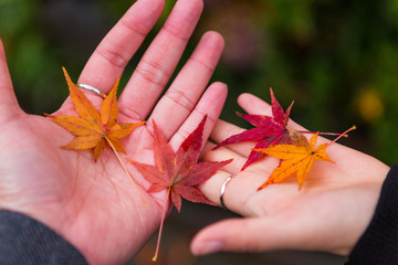 Cropped Image Of Woman Holding Autumn Leaves