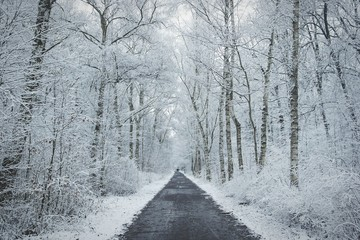 Road Amidst Frozen Trees During Winter