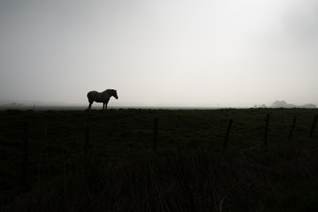 Silhouette Of Horse Standing At Dusk