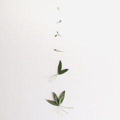 High Angle View Of Leaves Arranged Against White Background