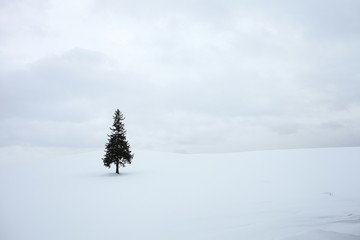 Lone Tree On Snow Covered Landscape Against Clouds