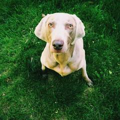 Close-Up High Angle Portrait Of A Dog