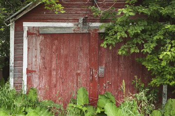 Old Red Barn With Plants Growing Around It, Manitoba, Canada
