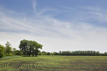 Canola Field Under A Blue Sky, Winnipeg, Manitoba, Canada