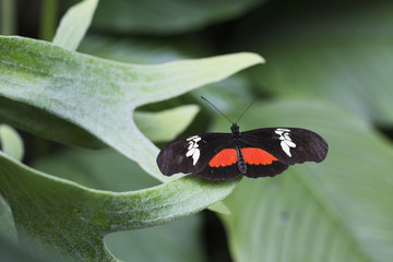 Close up of a butterfly on a leaf, Niagara Falls, Ontario, Canada