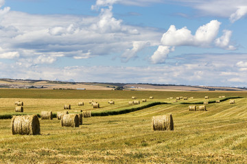 Hay bales in a mostly cut rolling field with clouds and blue sky, Alberta, Canada