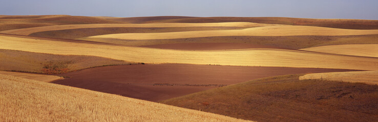 Contour fields with stripes of ploughed earth and cut grain are shown with a blue sky in the background, Palouse, Washington, United States of America