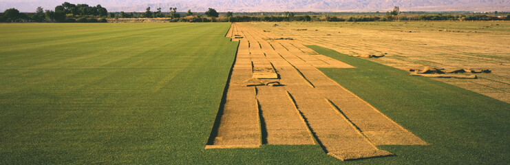 Partially cut sod field in the spring on a sod farm in California's Coachella Valley, Oasis, California, United States of America