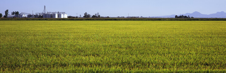 A field of young rice is seen in early fall with grain elevators, mountains and blue sky in the background, Central Valley, Maxwell, California, United States of America