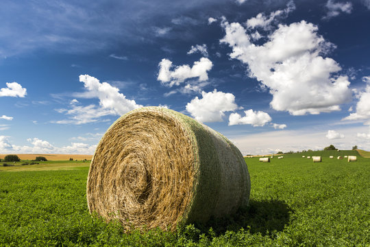 Close up of large round hay bale in an alfalfa field with clouds and blue sky, Acme, Alberta, Canada