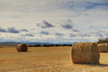 Hay bales in a field with the rocky mountains in the background,Calgary alberta canada