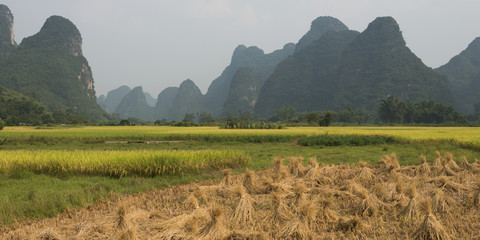 Landscape of peaked mountains and bundles of a crop in a field
