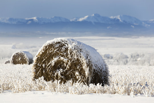 Snow covered hay bale in a snow covered stubble field with mountains in the background,Alberta canada