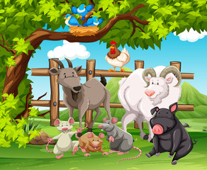 Farm animals living in the farm