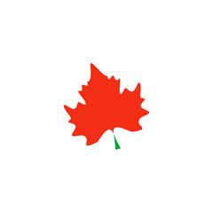 Maple Icon Vector