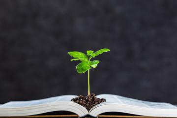 本と植物 Wall mural
