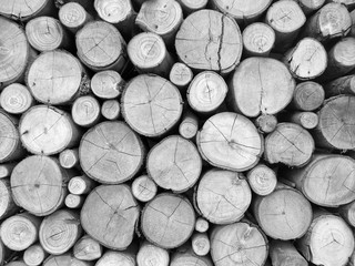 Round wood logs,The section of the circular timber