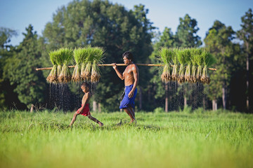 The son playing while his father worked in the rice fields