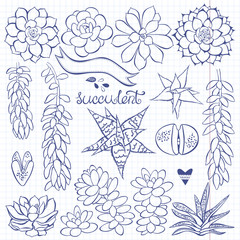Vector succulent set. Vector illustration for design, isolated elements on paper from a notebook.