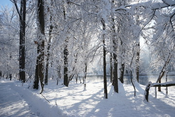 Winter landscape in the park. High resolution and quality