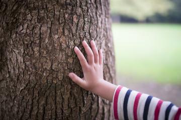大木に触る子供の手