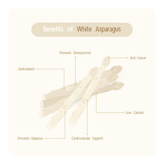 Infographic for white asparagus benefits with handwriting font style